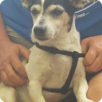 Jack Russell Terrier Mix Dog for adoption in Cincinnati, Ohio - Buddy