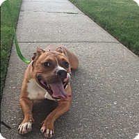 Adopt A Pet :: Captain - Staten Island, NY