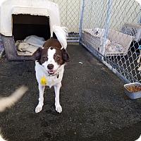 Adopt A Pet :: MILLIE - Gustine, CA