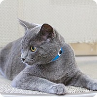 Adopt A Pet :: Alexi - Chula Vista, CA
