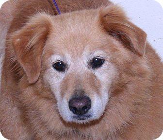 Golden Retriever Mix Dog for adoption in McDonough, Georgia - Lyra