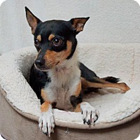 Adopt A Pet :: Viktor (D16-104) - Lebanon, TN