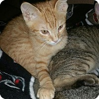 Adopt A Pet :: Simba & Tito - Land O Lakes, FL