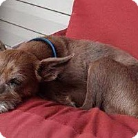 Adopt A Pet :: Nelson - Allentown, NJ