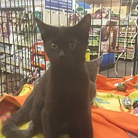 Adopt A Pet :: Allura - Griffin, GA