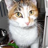 Adopt A Pet :: Chinita - Waupaca, WI
