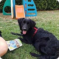 Adopt A Pet :: Jack - Grass Valley, CA