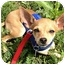 Photo 3 - Chihuahua Mix Puppy for adoption in AUSTIN, Texas - VALENTINA