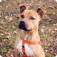 Adopt A Pet :: Tristan - Chicago, IL