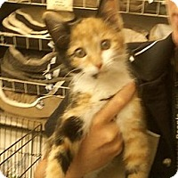 Adopt A Pet :: Camile - Troy, OH