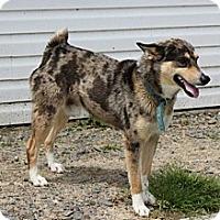 Adopt A Pet :: Duke - Stuttgart, AR