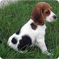 Adopt A Pet :: Sally Ann - Novi, MI