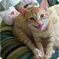 Adopt A Pet :: Sylvie - Marietta, GA