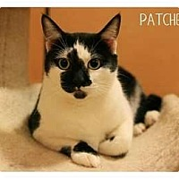 Adopt A Pet :: Patches - Brea, CA