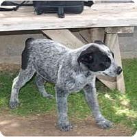 Adopt A Pet :: Solay - Phoenix, AZ
