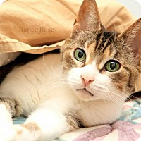 Adopt A Pet :: Mera **Hearing Impaired** - Sterling Heights, MI