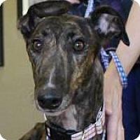 Adopt A Pet :: Lindsey - Tucson, AZ