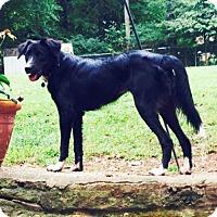 Adopt A Pet :: Millie - Nashville, TN