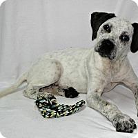 Adopt A Pet :: Buckaroo - Lufkin, TX