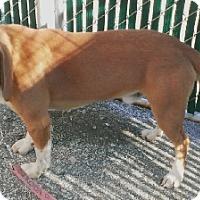 Adopt A Pet :: Ranger - Aurora, IL