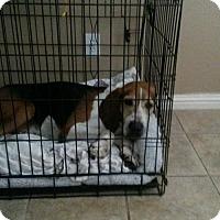 Adopt A Pet :: Clemson - Carmichael, CA