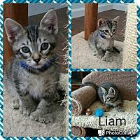 Adopt A Pet :: Liam - Arlington/Ft Worth, TX