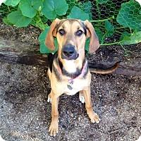 Adopt A Pet :: Morgan - Tucson, AZ