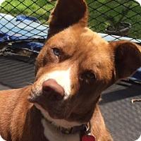 Adopt A Pet :: Charles - Garland, TX