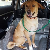 Adopt A Pet :: Cassie Jane - Lawrenceville, GA
