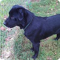 Adopt A Pet :: Harvey - Metamora, IN