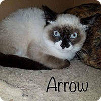 Adopt A Pet :: Arrow - Irwin, PA