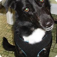 Adopt A Pet :: Nico - New Oxford, PA