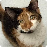 Adopt A Pet :: MaryAnn - Park Falls, WI