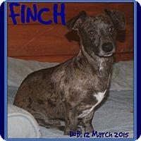 Adopt A Pet :: FINCH - Jersey City, NJ