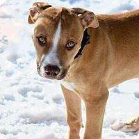 Adopt A Pet :: Brutus - Ashland, WI
