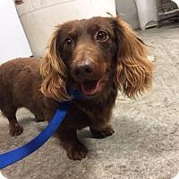 Adopt A Pet :: Fritz - Aurora, IL