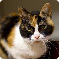 Adopt A Pet :: Phoebe - Troy, MI