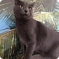 Adopt A Pet :: Gizmo - Spring Brook, NY