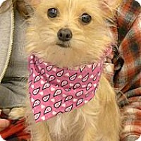 Adopt A Pet :: Honey 6 pounds - Sacramento, CA