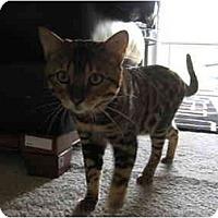 Adopt A Pet :: Tarzan - Alexandria, VA