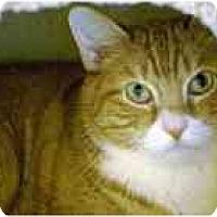 Adopt A Pet :: Aramis - Marietta, GA