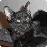 Adopt A Pet :: Dashiell - North Highlands, CA