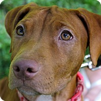 Adopt A Pet :: Butter - Reisterstown, MD