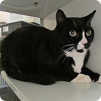 Adopt A Pet :: Inky - Gilbert, AZ