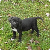 Adopt A Pet :: Simon - Ormond Beach, FL