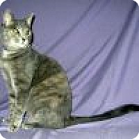 Adopt A Pet :: Tolliver - Powell, OH