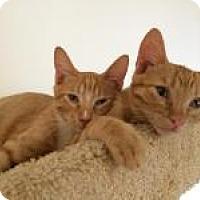 Adopt A Pet :: Red 'n Sox - Mission Viejo, CA