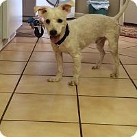 Adopt A Pet :: Mingo - Natchitoches, LA
