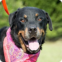 Adopt A Pet :: Jeff $125 - Seneca, SC