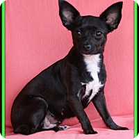 Adopt A Pet :: Blair - Edmonton, AB